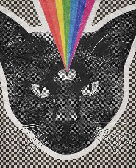3rd eye cat