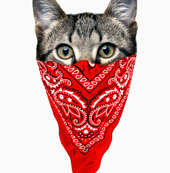 GANGSTA CAT ,750x1000,075,t,fafafa-ca443f4786